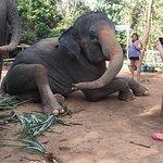 Photo of Elephant Jungle Sanctuary Phuket