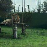 Safari Ravenna Fotografie