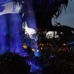 Valokuva: Disney's Animal Kingdom