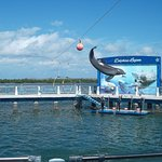 The dolphin show was so entertaining for all ages.  Staff did a great job with crowd interaction too!