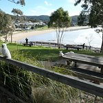 Rest Stop over looking Lorne Beach