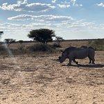 un rinoceronte ha deciso di avvicinarsi molto al nostro veicolo... bellissimo!