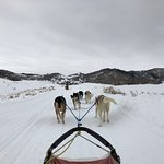 Foto di Grizzle-T Dog & Sled Works