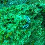 Nudi/Worm at Sail Rock