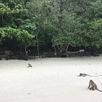 Photo of Monkey Beach
