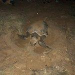 Mon Repos Turtle Centre صورة فوتوغرافية