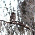 Owl sighting
