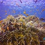 Jackson Reef turtle spotting
