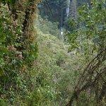 תמונה מCanopy Extreme El Chiflador
