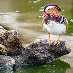 Aqua Safari Resort Photo