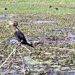 Kumarakom Bird Sanctuary 사진