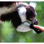 Obilasci prirode i rezervata sa divljim životinjama