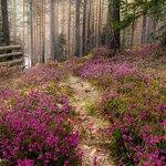 National Park Tara – fénykép
