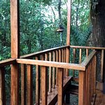 A view from the Toucan House Deck