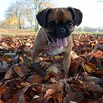 Pet-friendly accommodation available