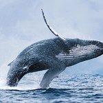 从雷克雅未克出发的观鲸之旅