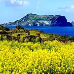 UNESCO Small Group Day Tour of Jeju Island - East Course