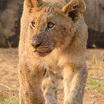 young cub pilansberg