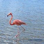 Flamingo Sorobon