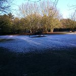 Light snow flury over the park