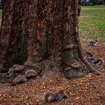 Squirrels are multiplying here & becoming aggressive toward people & food.