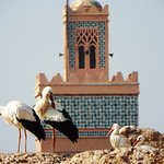 Storks on palace walls