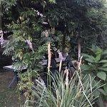Le jardin très bien entretenu
