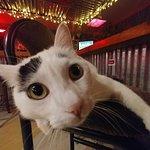 Josiefat the cat