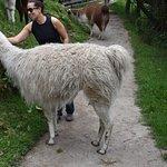 my friend with a llama at Winay wayna