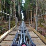 Zip World Fforest Photo