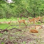 Wildlife at Liwonde National Park
