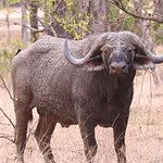 Wildlife from Liwonde National Park