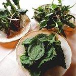 Borragine....Cicoria....Ortica. Per una fantastica zuppa...tutti i sabato di Febbraio alle Fontanelle.