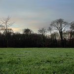 Sunrise over Astley Hall woodland