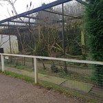 Linton Zoo ภาพ