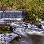Foto de Yarrow Valley Country Park