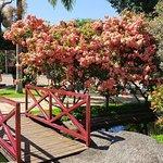 Hotel Mil Flores张图片