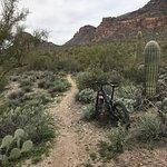 Mountain biking in Gold Canyon