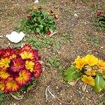 緑道脇に飢えられた花たち