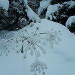 Es war eine tolle Schneelandschaft