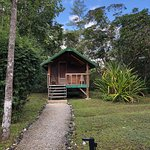 Our Forest Cabana