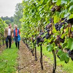 A stroll through the vineyard at the beautiful Raimes English Sparkling Wines