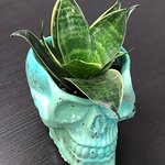 Hand Cast pot with a nice plant_3