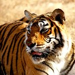 golden triangle tour with tiger safari, golden triangle tour with and ranthambhore