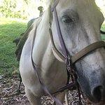 Lovely horse Ashley!
