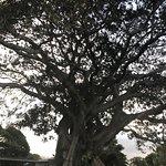 Photo de Fig Tree Restaurant