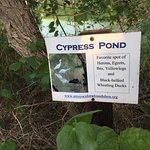 The ponds need to be taken care of