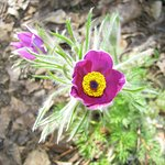 Olbrich flowers
