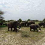 Tarangire elephants!
