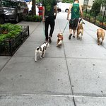 Piacevoli incontri sulla Fifth Avenue verso il Village